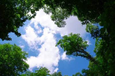 成長する木々!