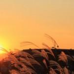 秋の日は釣瓶落とし ~秋の日の入りは一日に一分以上早くなっていく、三夕の歌